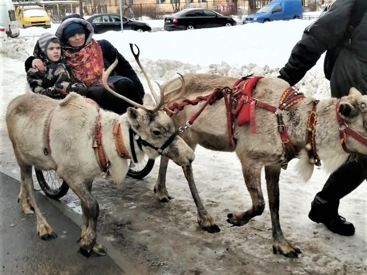 Фото с праздника Масленицы для сайта СПб РО ОООИ ВОГ